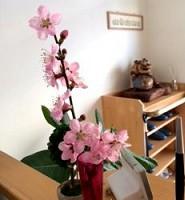 治療院にピッタリの桃の花