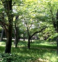 新緑の気持ちの良い気候になりました