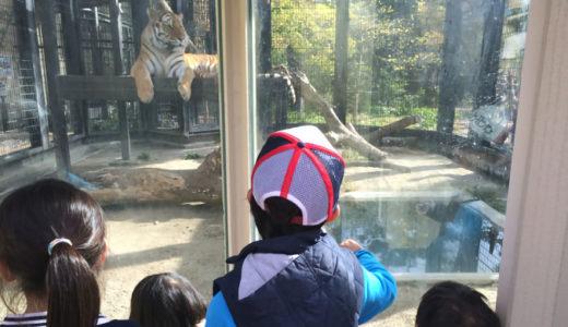 リニューアルした京都市動物園が想像以上に変わっててビックリ!