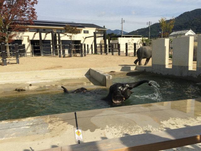 京都市動物園の象
