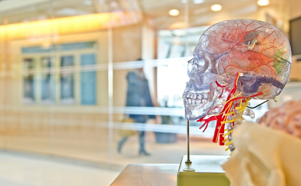 脳に流れる血液