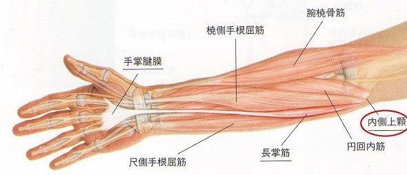 腕の筋肉の様子