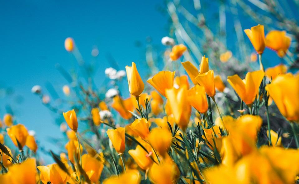 春は「気」が上にあがる