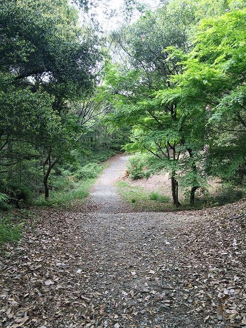 [太陽が丘]冒険の森