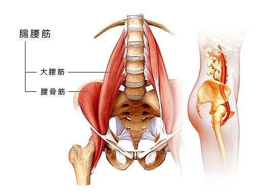 腸腰筋が腰痛の原因!?腸腰筋による痛みの原因と簡単にできるストレッチを紹介