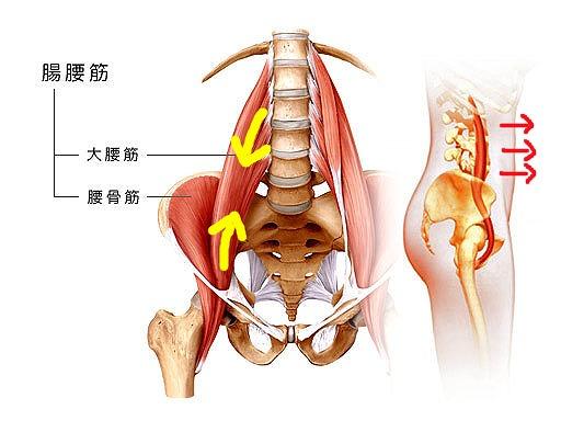 『腸腰筋』と腰痛の関係