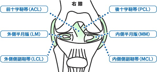 膝靭帯損傷(ひざじんたいそんしょう)