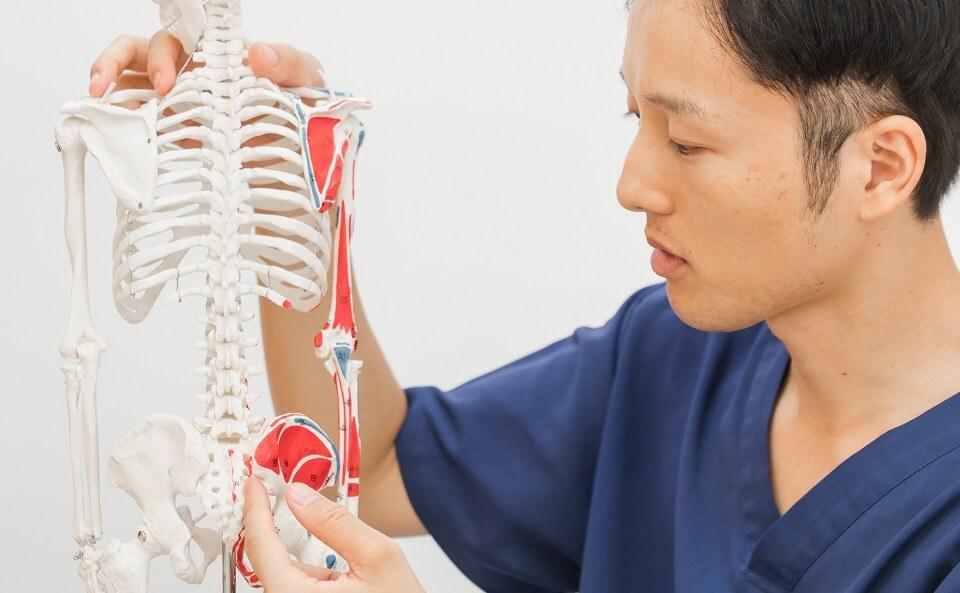骨格と筋肉へのアプローチ