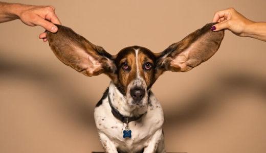 副耳の原因と切除法!子供(生後40日)の副耳をとることにしました