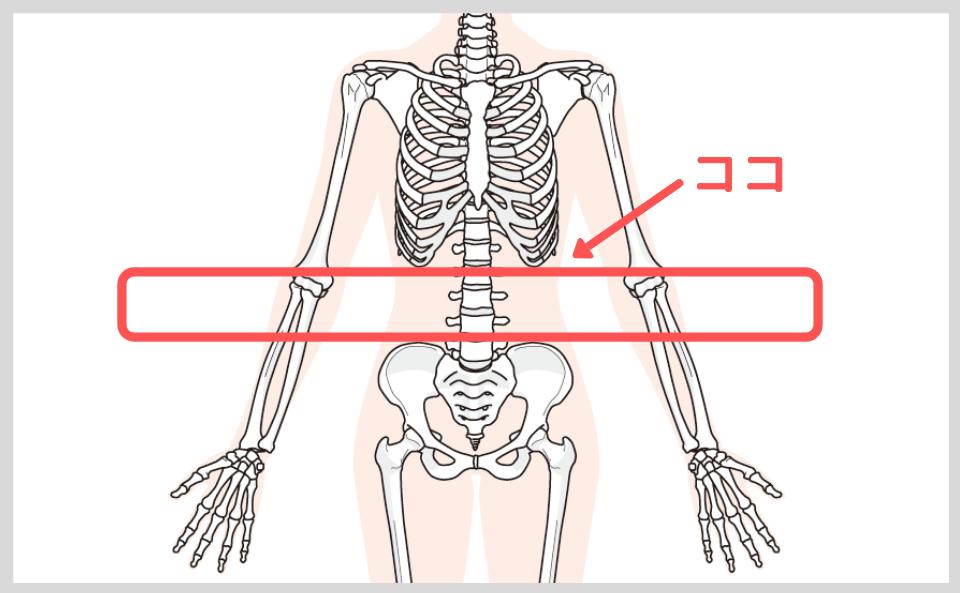 腰痛コルセットは肋骨と骨盤に当たらない場所に巻く