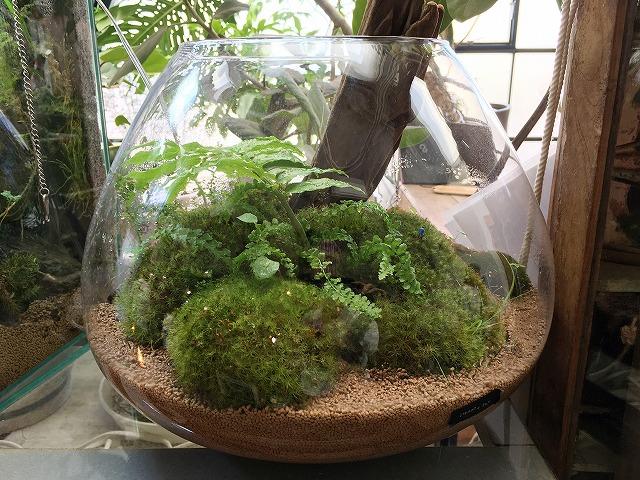 """「cotoha(コトハ)」京都で観葉植物なら""""絶対に""""ここがおすすめ!"""