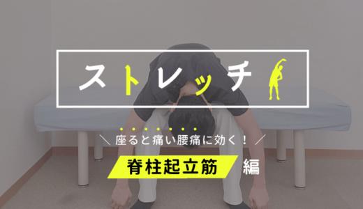 【座っていると腰が痛い人へ】脊柱起立筋(背骨沿い)のストレッチ方法