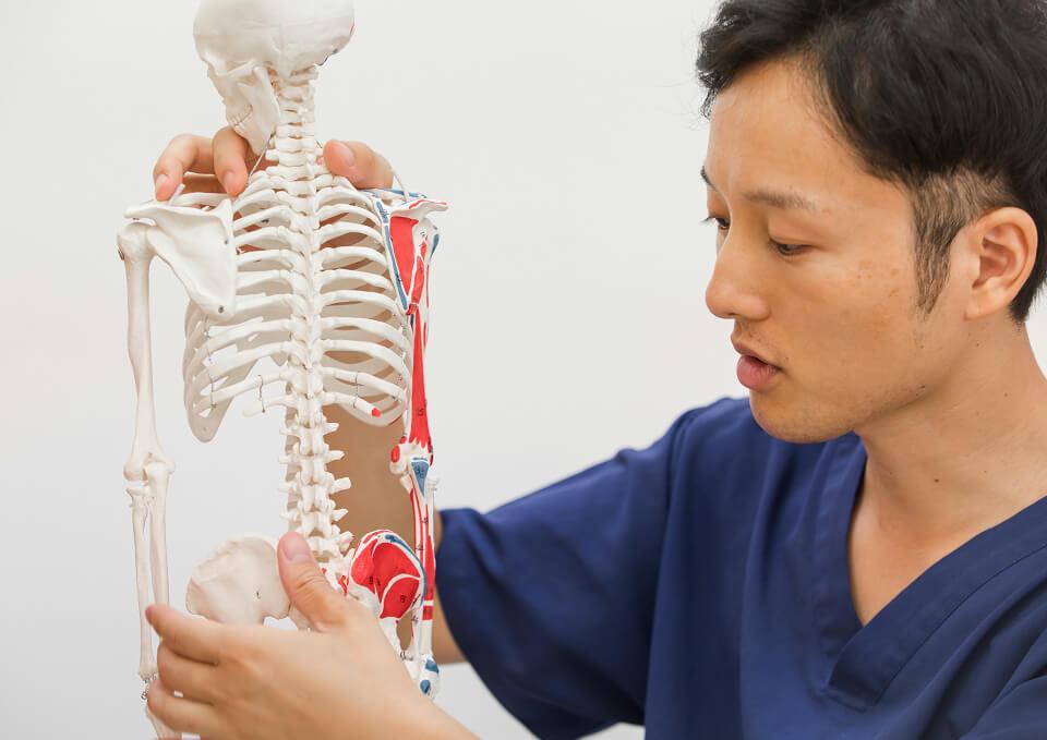 不調の原因の多くは骨格と姿勢